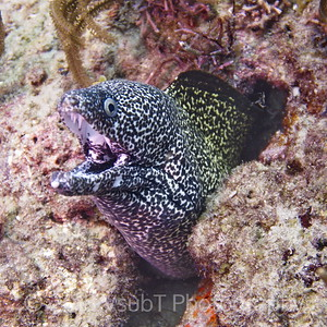 moray eel off West Palm Beach, FL