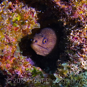 moray eel off Key Largo, FL