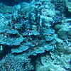 Coral at Fairyland Reef