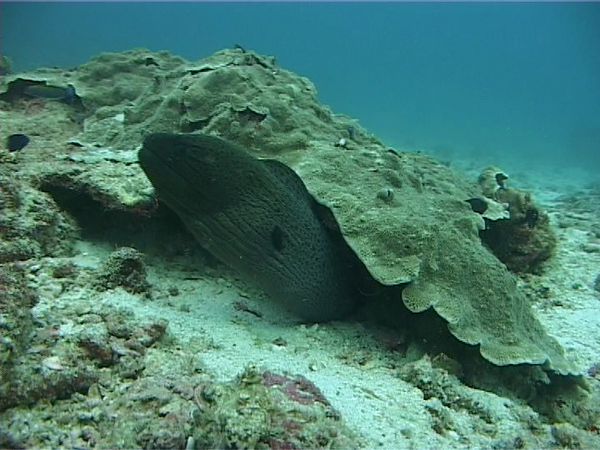 Moray eel. There were many of these, of all sizes and colors.