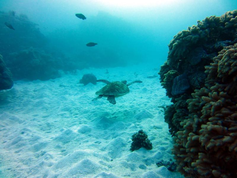 A sea turtle!