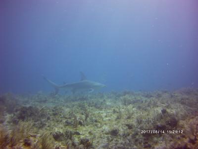 2017_08_14 - Dan - Hammerhead Shark!!