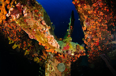 Propeller of the Hilma Hooker