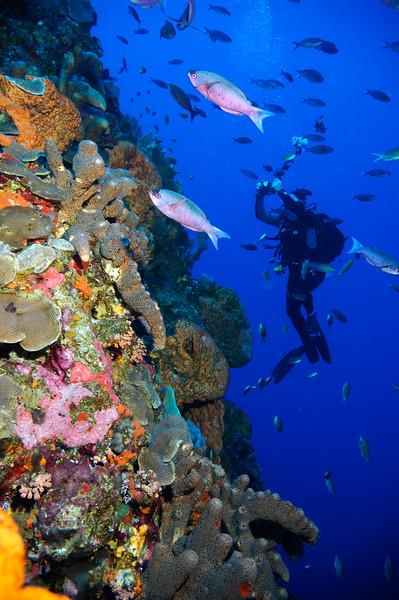 Caribbean Explorer II - 2005