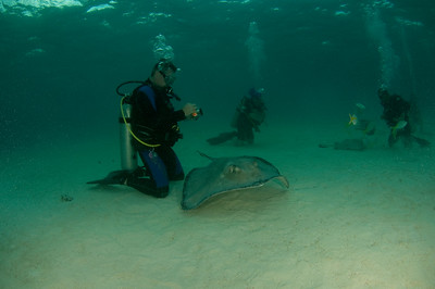 Ross and Stingray