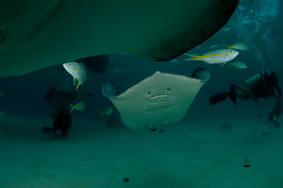 Stingray coming in for a flyby