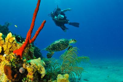Tony Thomas and Green Sea Turtle