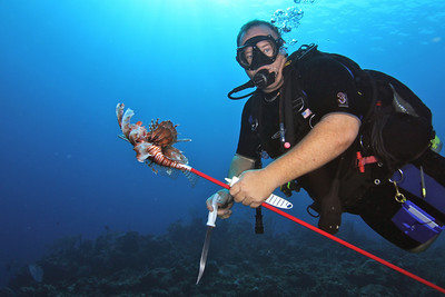 The Lionfish Hunter