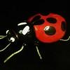 Ladybug - Mary Bayer