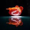 Picante  Illuminated Resin