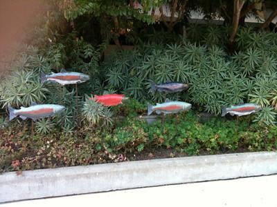 Garden Swimmers