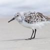 water bird        211sm