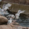 seagulls                    2111