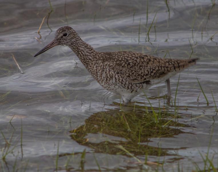shore bird        411