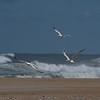 Four Tern
