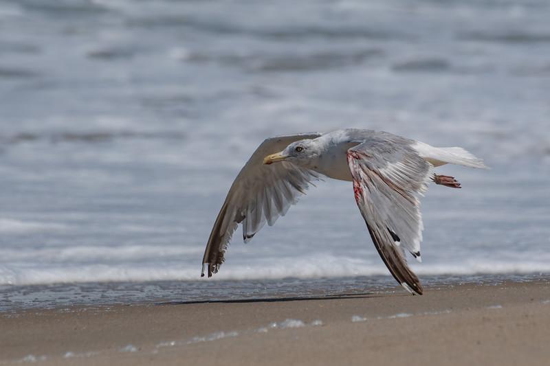 Skimming The Sand