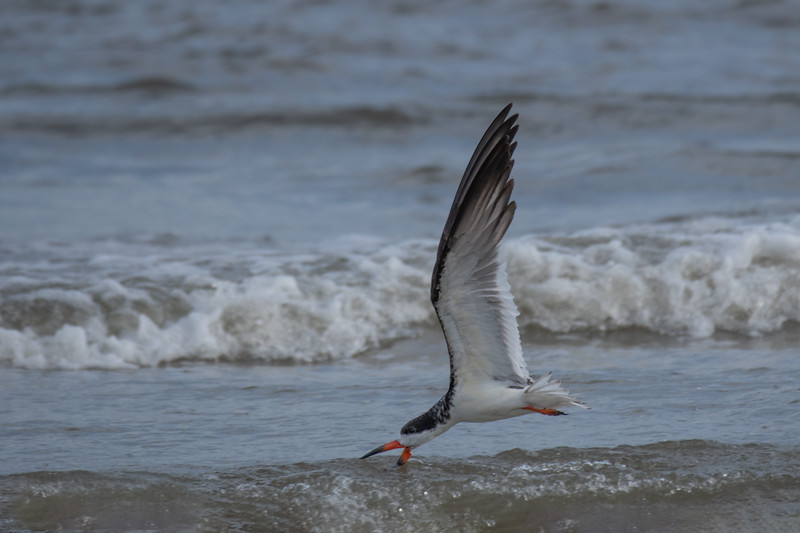 Skimming The Surf