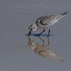 Beak In The Sand