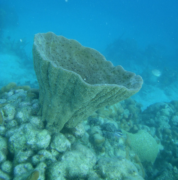 This sponge was about 18 inches high.
