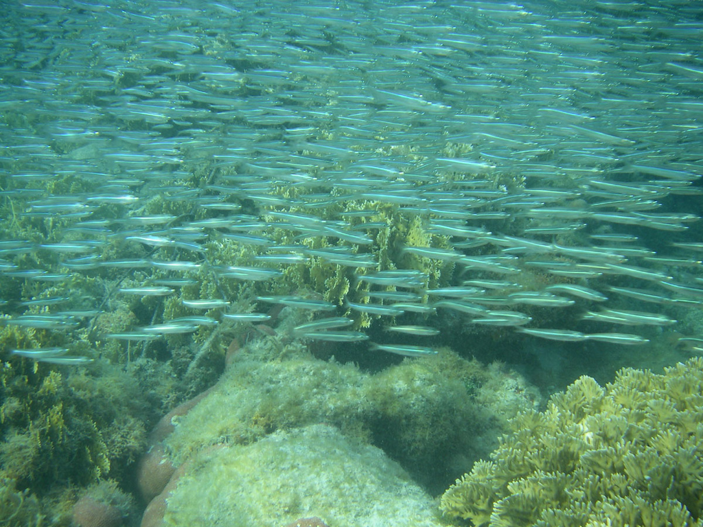 Sometimes the schools of small reef fish were so thick that you couldn't see through them.