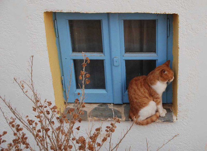 The islands are overrun by photogenic cats.  (photo by Lena Conlan)