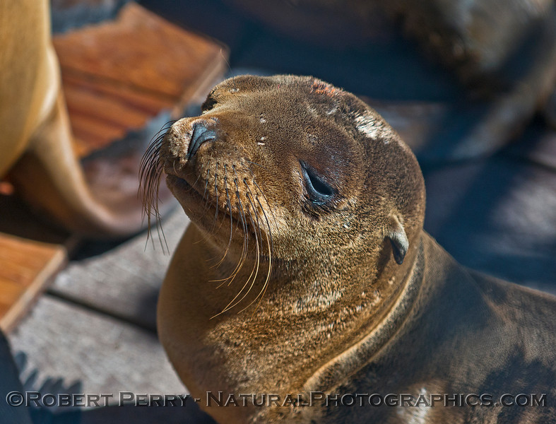 Juvenile sea lion in the warm sun.