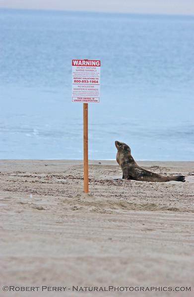 Mammal observes warning sign for mammals.
