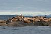 Sea lions like a view too