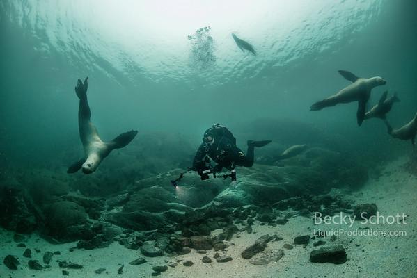 Serene sea lion scene