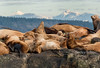 Sea lions and mountains