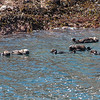 Raft of otters below big island