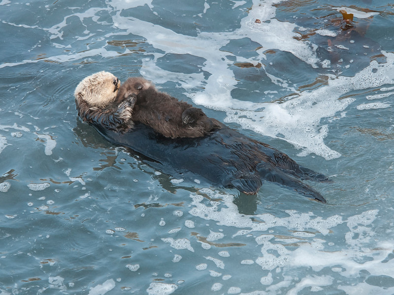 Otter and new pup