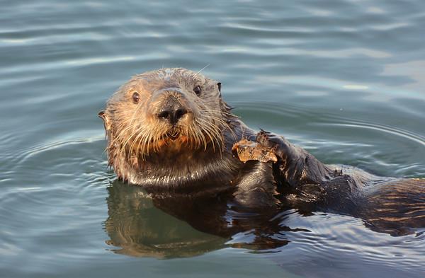 Sea Otters2