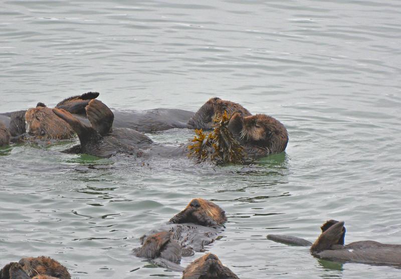 Hanging on to kelp while sleeping