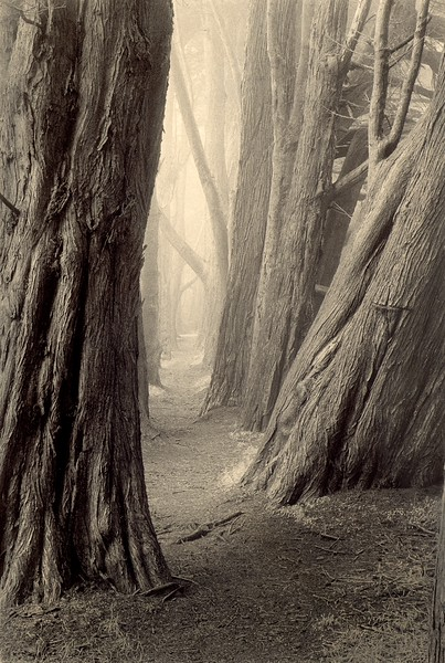 Cypress Path, Sea Ranch, California
