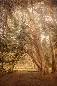 Cypress Arcade, Sea Ranch, California