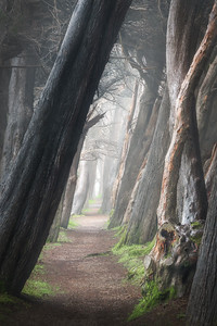 Cypress Passage, Sea Ranch, CA