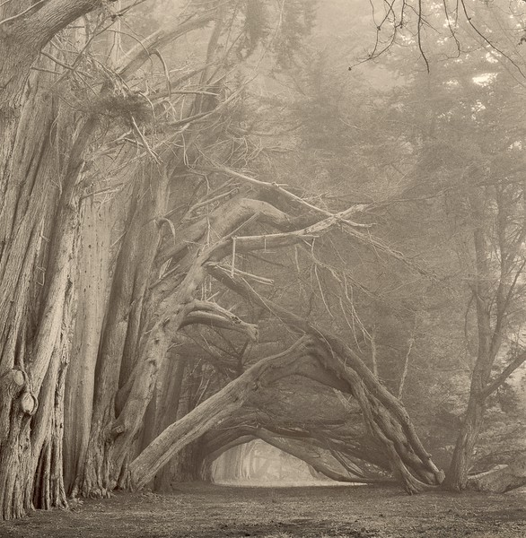 Gateway, Sea Ranch, California