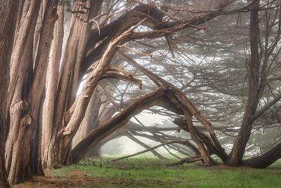 Hedgegate Hedgerow, Sea Ranch, CA