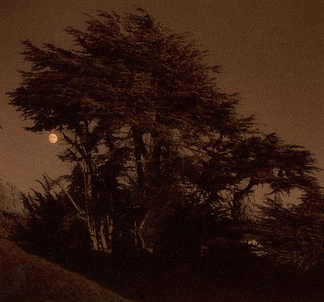 Harvest Moon, Sea Ranch, California