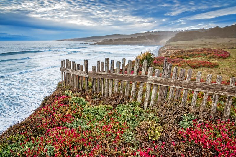 Flowers & Fence, Sea Ranch, California