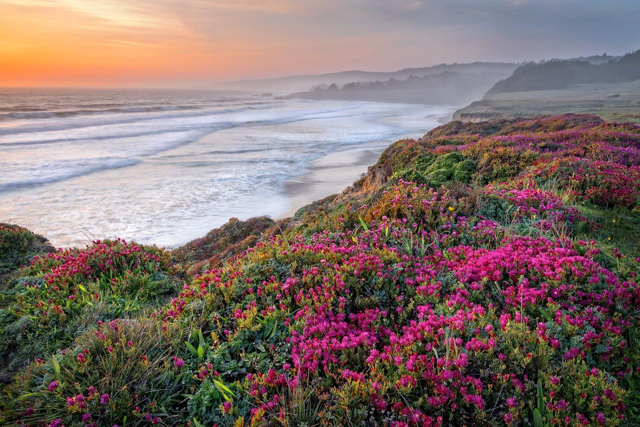 Bluff Flowers, Sea Ranch, California