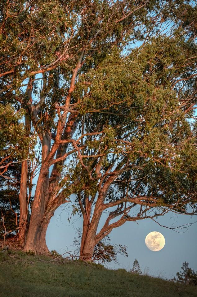 Bright Moon, Sea Ranch, California