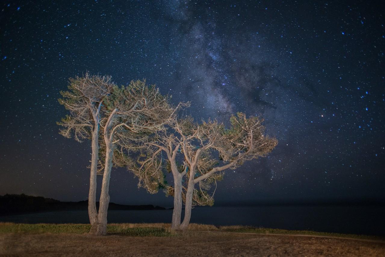 Black Point Cypress & Milkyway, Sea Ranch, California