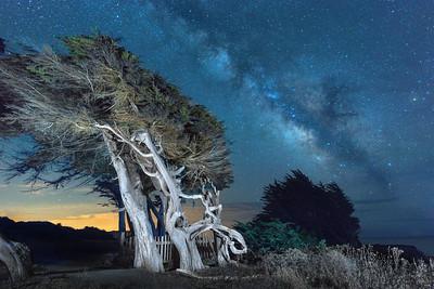 Night Sentinels, Sea Ranch, California