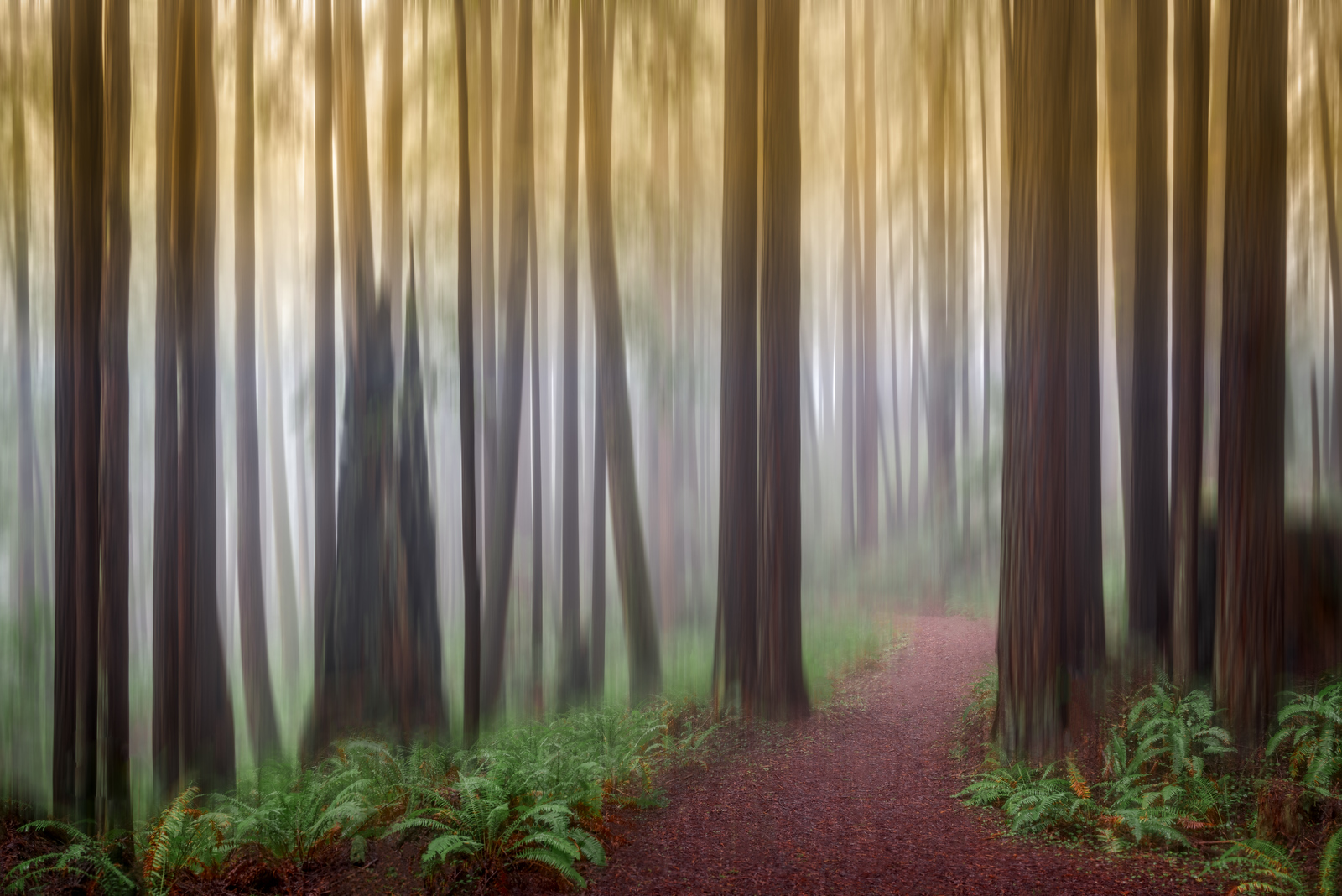 Mystic Forest, Study #2, Sea Ranch, California