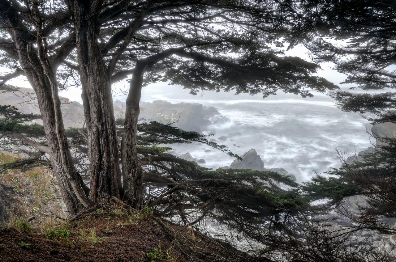 Cypress Perch, Sea Ranch, California