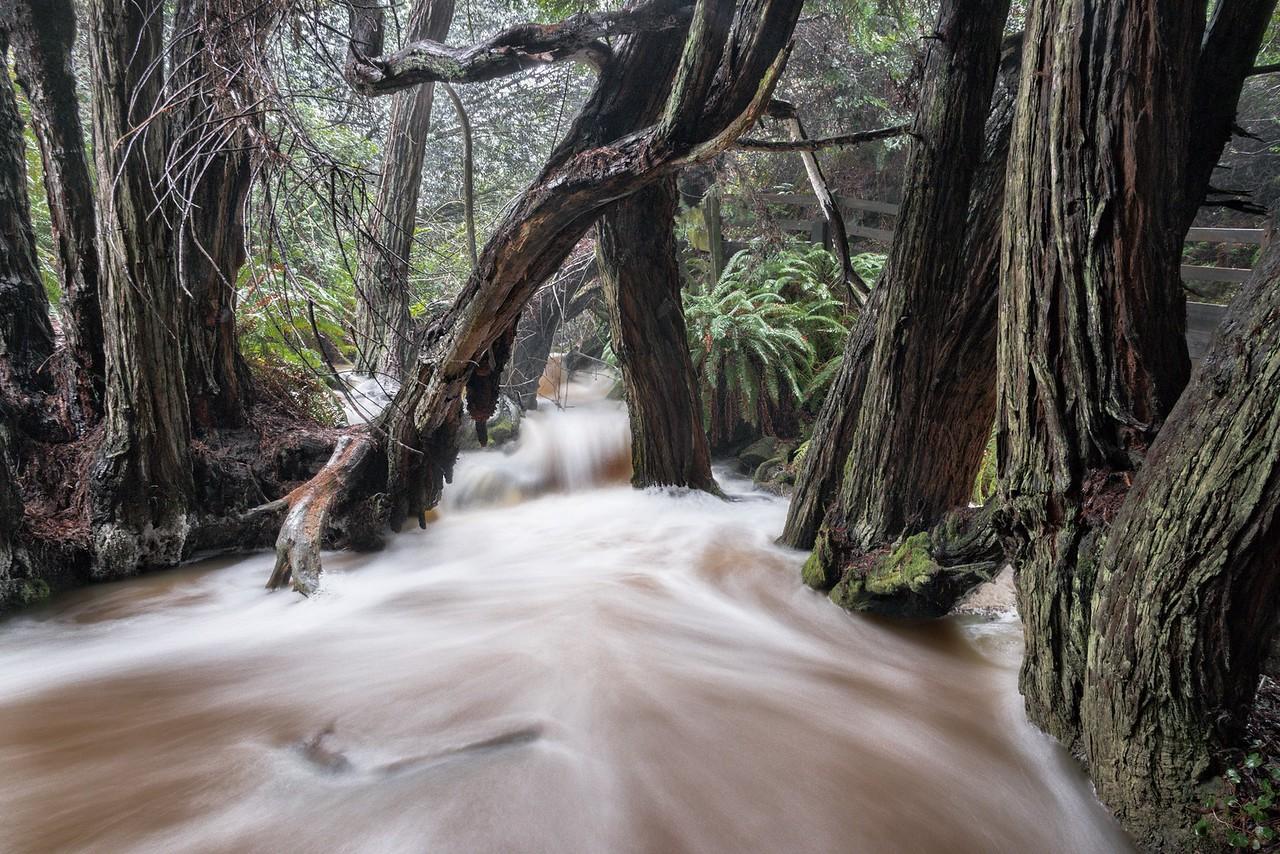 Salal Creek, Sea Ranch, California