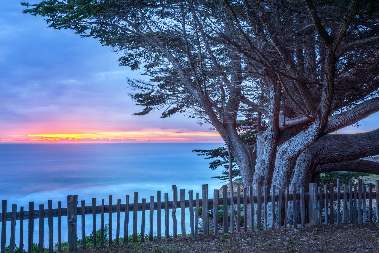 Blue Cypress, Sea Ranch, California