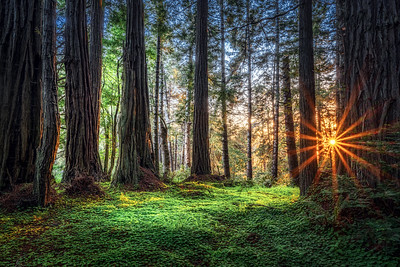 Redwood Sunset, Sea Ranch, California